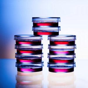 Comark Instruments helps keep your kitchen Salmonella-free